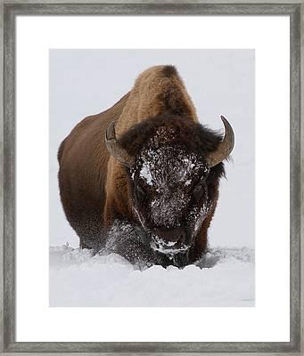 Snowbound Framed Print by Sandy Sisti