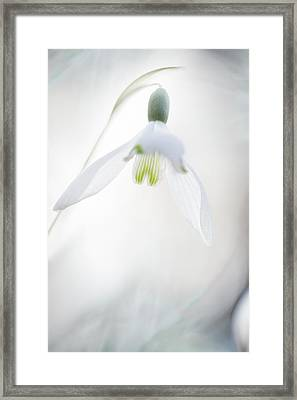 Framed Print featuring the photograph Snowdrop A Fragile Hint Of Spring by Dirk Ercken