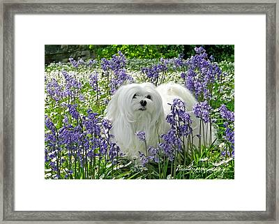 Framed Print featuring the mixed media Snowdrop In The Bluebell Woods by Morag Bates