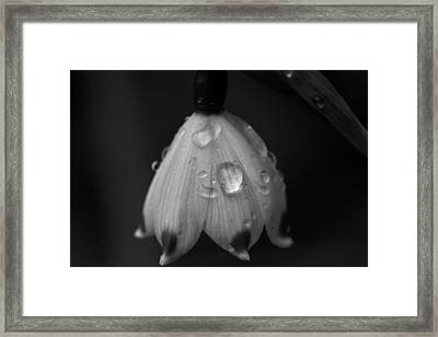 Framed Print featuring the photograph Snowdrop by Keith Elliott