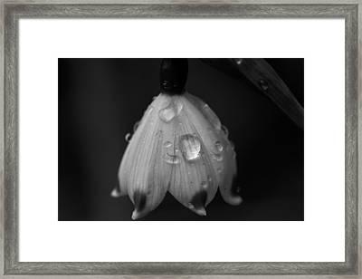 Snowdrop Framed Print