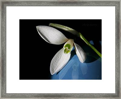 Snowdrop On Blue And Black Framed Print by Chris Berry