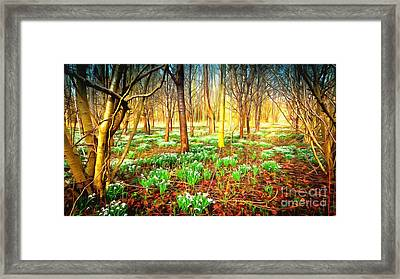 Snowdrops In The Woods Framed Print