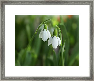Framed Print featuring the photograph Snowdrops by Mary Jo Allen