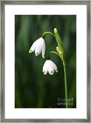Snowdrops Painted Finger Nails Framed Print