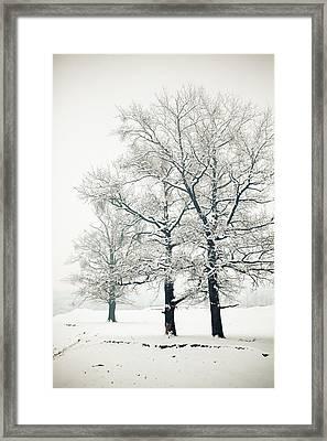 Snowed Framed Print by Gabriela Insuratelu