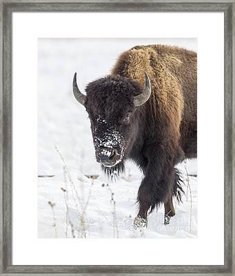 Snowed Framed Print