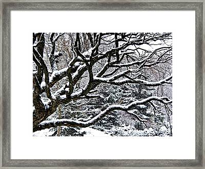 Snowfall And Tree Framed Print