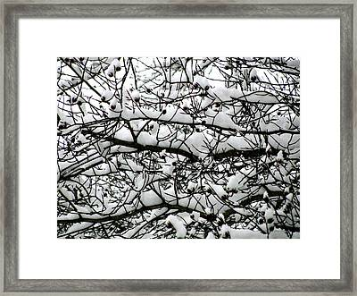 Snowfall On Branches Framed Print by Deborah  Crew-Johnson