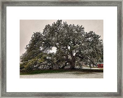 Snowfall On Emancipation Oak Tree Framed Print by Jerry Gammon