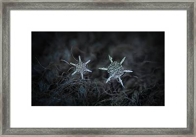 Snowflake Photo - When Winters Meets Framed Print by Alexey Kljatov