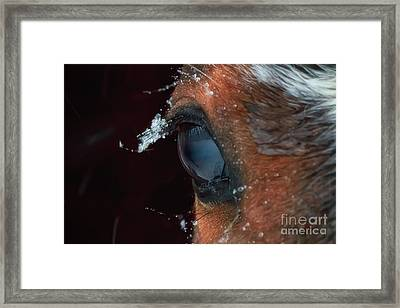 Snowflakes That Stay On My Eyelashes Framed Print by Elizabeth Dow