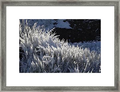 Snowgrass Framed Print