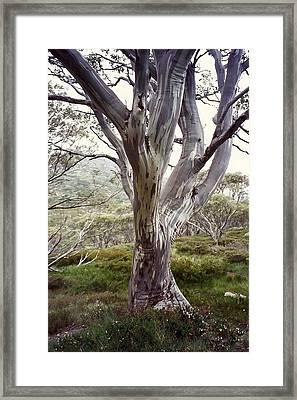 Snowgum Like Whirling Dervish Framed Print by Adrianne Wood
