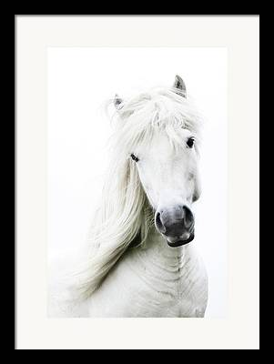 Horse Images Framed Prints