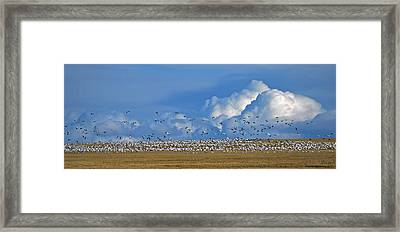 Snows And Storms Framed Print