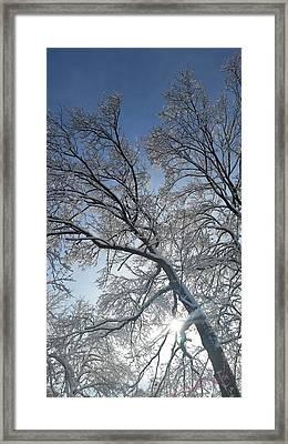 Snowshine Framed Print
