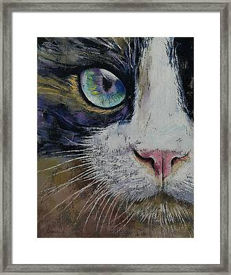 Snowshoe Cat Framed Print by Michael Creese