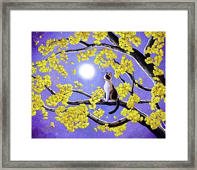 Snowshoe Siamese Kitten In Gingko Leaves Framed Print by Laura Iverson