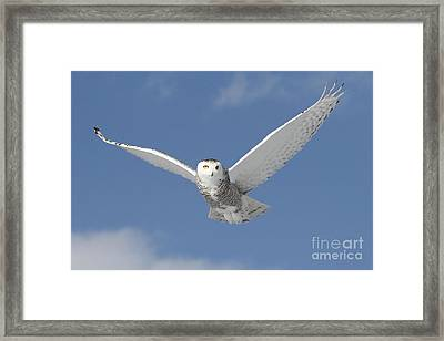 Snowy Angel Framed Print