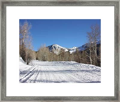 Snowy Aspen Framed Print by Kim Hojnacki