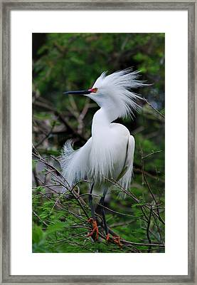 Snowy Attitude Framed Print by Skip Willits