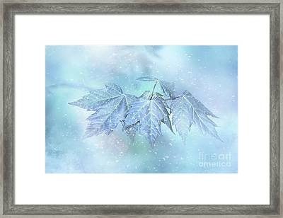 Snowy Baby Leaves Framed Print