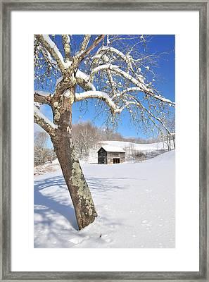 Snowy Barn Framed By Tree Framed Print by Alan Lenk