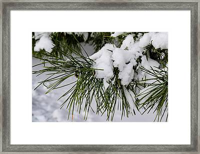 Snowy Branch Framed Print