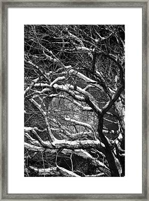 Snowy Branches Against A Full Moon Framed Print