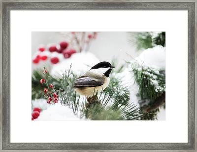 Snowy Chickadee Bird Framed Print