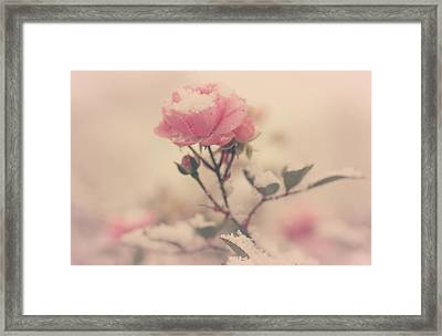 Snowy Day Of Roses Framed Print