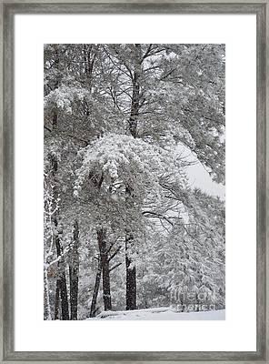 Snowy December Framed Print