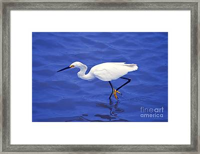 Framed Print featuring the photograph Snowy Egret 1 by Bill Holkham