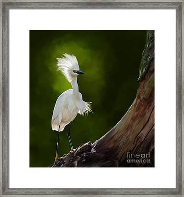 Snowy Egret Artwork 5154 Framed Print