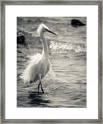 Snowy Egret At Lake Chapala Framed Print by Dane Strom