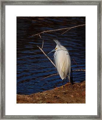 Snowy Egret Digital Art Framed Print by Ernie Echols