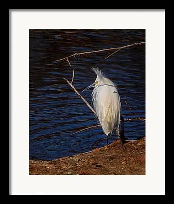 Egret Digital Art Framed Prints