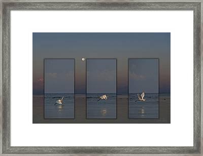 Snowy Egret Moon Framed Print