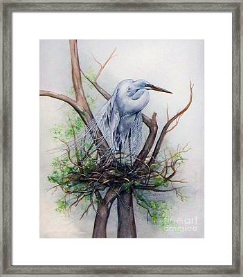 Snowy Egret On Nest Framed Print by Laurie Tietjen