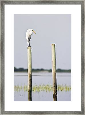 Framed Print featuring the photograph Snowy Egret On Pilings by Bob Decker