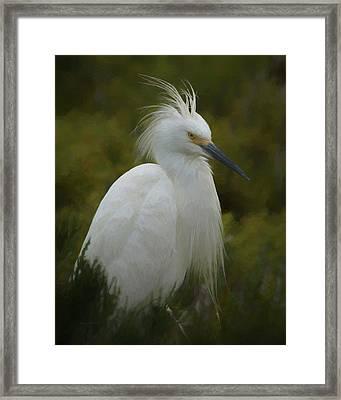 Snowy Egret Portrait 1 Da Framed Print by Ernie Echols