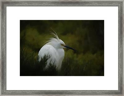 Snowy Egret Portrait Da Framed Print by Ernie Echols