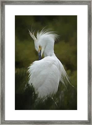 Snowy Egret Preening 3 Da Framed Print by Ernie Echols