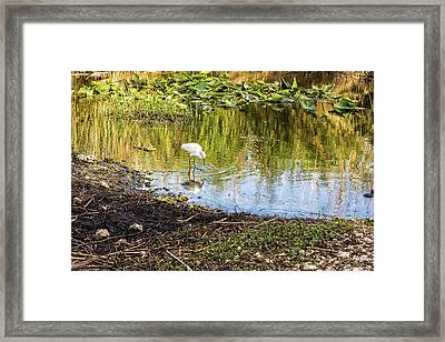 Snowy Egret Reflections Framed Print