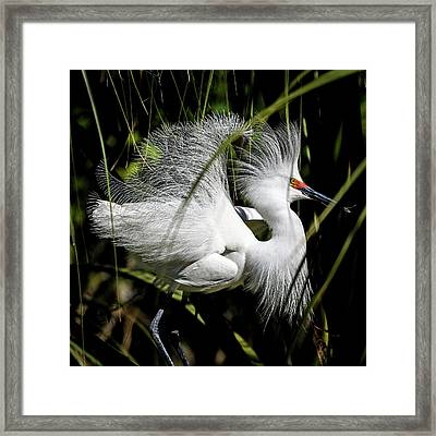 Framed Print featuring the photograph Snowy Egret by Steven Sparks