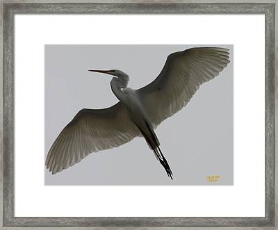 Snowy Egret Wings Of An Angel Framed Print