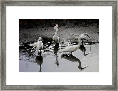 Framed Print featuring the photograph Snowy Egrets I by Jane Melgaard