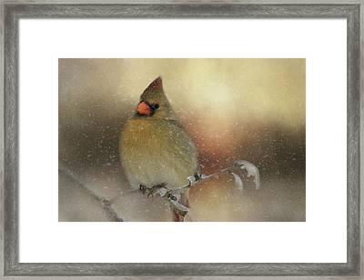 Snowy Female Cardinal Framed Print