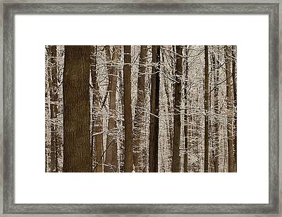 Snowy Forest Elevation Framed Print